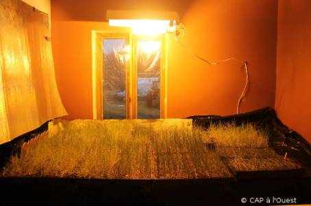 semis dans le salon