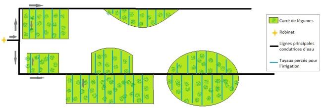 Schéma d'irrigation au goutte à goutte